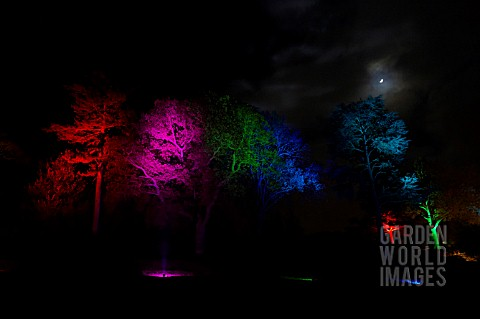RHS_WISLEY_GARDEN_TREES_LIT_UP_IN_THE_LIGHT_TRAIL_EVENT