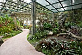 BROMELIAD COLLECTION AT SINGAPORE BOTANICAL GARDENS