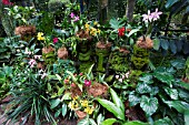 ORCHID COLLECTION AT SINGAPORE BOTANICAL GARDENS