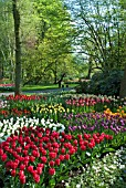TULIP AND ANEMONE DISPLAY AT KEUKENHOF GARDENS, HOLLAND