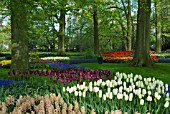TULIP AND HYACINTH DISPLAYS AT KEUKENHOF GARDENS, HOLLAND
