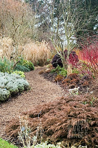 PATHWAY_THROUGH_THE_WINTER_GARDENS__SIR_HAROLD_HILLIERS_GARDENS__HAMPSHIRE