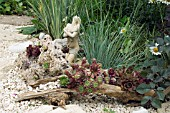 SEMPERVIVUMS PLANTED INTO DRIFTWOOD. OWNERS MR & MRS CLARK