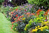 COLOURFUL BORDERS,  WITH VERBENA BONARIENSIS,  DAHLIA,  HELENIUM AND ALSTROEMERIA.