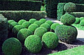 BUXUS SEMPERVIRENS,  BOX. TOPIARY,  EAST RUSTON OLD VICARAGE,  NORFOLK