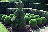 BUXUS SEMPERVIRENS,  BOX,  TOPIARY,  EAST RUSTON OLD VICARAGE,  NORFOLK.