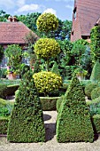 BUXUS,  BOX TOPIARY IN THE DUTCH GARDEN,  EAST RUSTON OLD VICARAGE,  NORFOLK