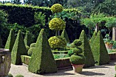 BUXUS,  BOX TOPIARY IN DUTCH GARDEN,  EAST RUSTON OLD VICARAGE,  NORFOLK