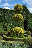 BUXUS,  BOX TOPIARY IN THE DUTCH GARDEN,  EAST RUSTON OLD VICARAGE,  NORFOLK.