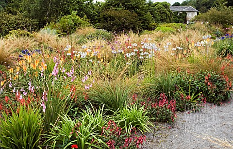 VIEW_OF_THE_FLOWER_BORDERS_AT_THE_GARDEN_HOUSE__DEVON