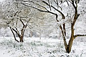 SNOW COVERED WOODLAND LANDSCAPE