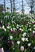 A WOODLAND BANK OF SPRING FLOWERS, KUEKENHOF PARK GARDENS, LISSE, HOLLAND.