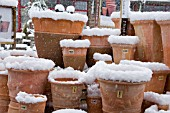 SNOW COVERED TERACOTTA POTS