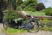 OLD BICYCLE USED AS PLANTER. COOLAUGHT GARDEN, CO. WEXFORD, IRELAND, OWNERS CAROLINE AND HARRY DEACON.