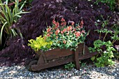 WOODEN WHEELBARROW PLANTED WITH FLOWERS. COOLAUGHT GARDEN, CO. WEXFORD, IRELAND, OWNERS CAROLINE AND HARRY DEACON.