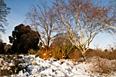 THE WINTER GARDEN COVERED IN SNOW AT WAKEHURST PLACE