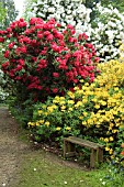 BENCH SEAT,  AZALEAS AND RHODODENDRONS,  LEONARDSLEE GARDENS,  SUSSEX.