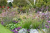PENNISETUM CASSIANS CHOICE IN PURPLE BORDER