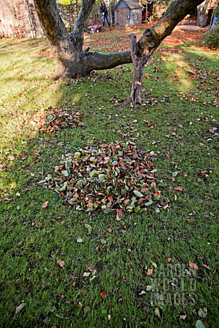 PILE_OF_AUTUMN_LEAVES_IN_GARDEN