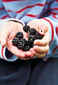 CHILD HOLDING BLACKBERRIES