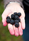 LADY HOLDING BLACKBERRIES