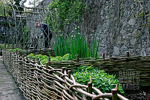 RAISED_BED_MADE_WITH_SMALL_WILLOW_HURDLES__DESIGNED_TO_BE_PLANTED_AS_POTAGER