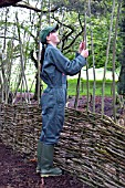 WORKING ON A WILLOW HURDLE,  BUILT TO PROVIDE A SCREEN  IN WOODLAND