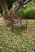 OLD TEAK BENCH UNDER CHERRY TREE IN AUTUMN.