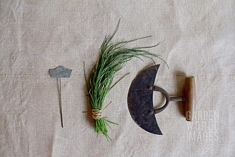 HERB_STILL_LIFE__CHIVES