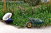 LOST GARDENS OF HELIGAN, GARDENER WORKING IN THE FLOWER GARDEN