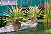 AGAVE ANGUSTIFOLIA IN CLAY POTS