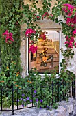 SMALL FRONT GARDEN IN FRONT OF GALLERY WINDOW, ST PAUL DE VENCE, FRANCE