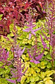 ASTILBE x ARENDSII COLORFLASH LIME