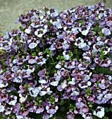 DIASCIA DENIM BLUE