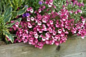 DIASCIA LITTLE DANCER