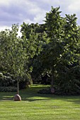 PRUNUS DULCIS (ALMOND) AND JUGLANS REGIA WALNUT TREES AT WESTLANDS GARDEN,  SALLY PLAYER.