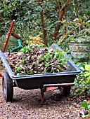 WHEELBARROW AT DENMANS GARDEN