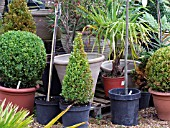 POTTED PLANTS FOR SALE IN GARDEN CENTRE.