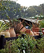 POTS AND CORDYLINES IN GARDEN CENTRE.