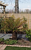 DICKSONIA ANTARTICA,  THE FAMILY GARDEN BY GRANT SUTHERLAND THE NATIONAL GARDENING CENTRE CAPEL MANOR