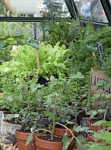 MIXED_VEGETABLES_AND_HERBS_IN_GREENHOUSE