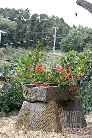 GARDEN_IN_TUSCANY_WITH_VIEWS_TO_VINEYARD