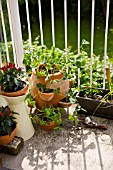 CITY BALCONY WITH STRAWBERRY PLANT AND VARIOUS VEGATABLES GROWING IN POTS AND WINDOW BOX