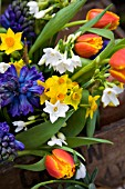 NARCISSUS GRAND SOLEIL DOR AND PAPERWHITE, TULIPA ALEPPO AND BLUE HYACINTHS