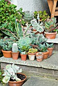SUCCULENTS AND CACTI IN POTS