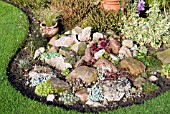 SUCCULENTS IN ROCK GARDEN IN OCTOBER