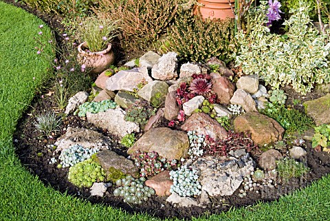 SUCCULENTS_IN_ROCK_GARDEN_IN_OCTOBER