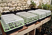 COVERED PROPAGATORS ON GREENHOUSE BENCH