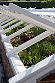 YOUNG VEGETABLE PLANTS FOR HARDENING OFF IN COLDFRAME,  WEST DEAN
