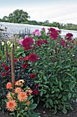 DAHLIA BORDER AT WEST DEAN, (WITH ROW OF STAKED DAHLIA)